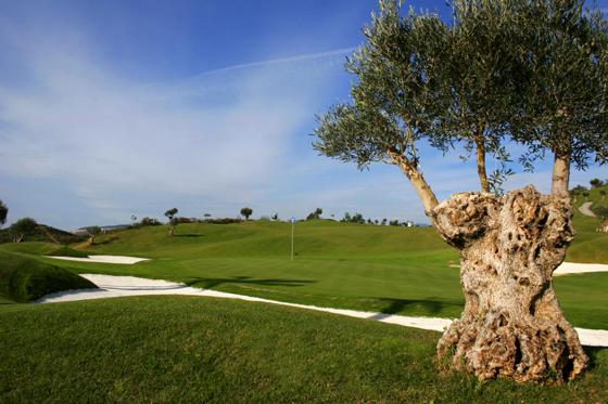 cerrado_aguila_golf_5